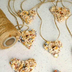 Make a bird feeder